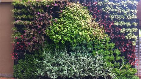 grow  vertical garden tips  growing  plant