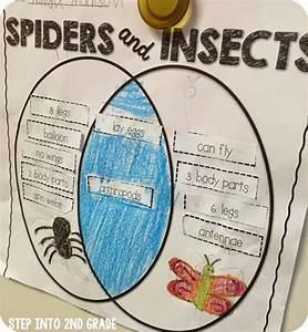 Spider Fun