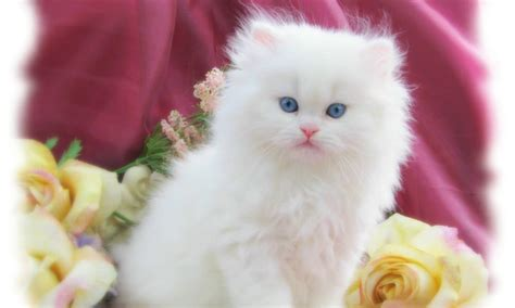 30 Cute And Lovely Cat Wallpapers For Desktop