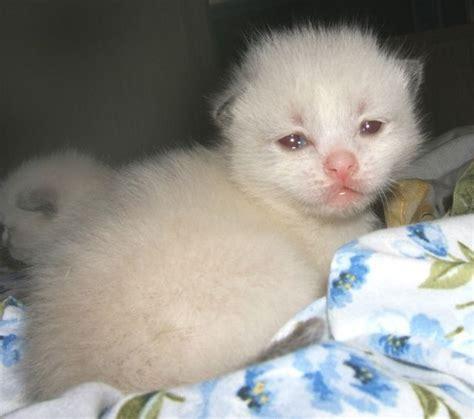 133 Best Images About Newborn Kittens On Pinterest