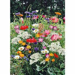 Graines Fleurs Des Champs : m lange fleurs champ tres graines baumaux ~ Melissatoandfro.com Idées de Décoration