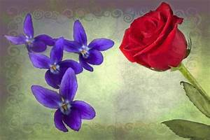 If Roses were as Red as his Broken Heart, & If Violets ...
