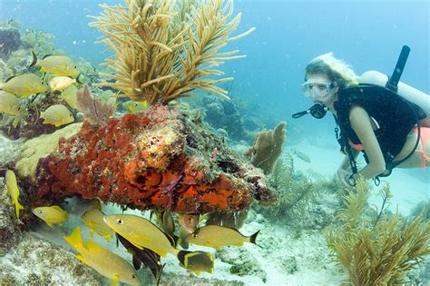 top places  dive   florida keys forbes travel