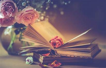 Books Flowers Roses Pink Romantic Wallpapers Petals