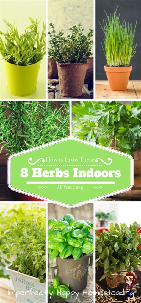 Growing Herbs Inside by 25 Best Ideas About Growing Herbs Indoors On