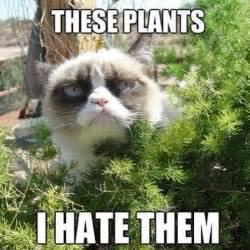 Silly Animal Memes - silly animal memes popsugar pets