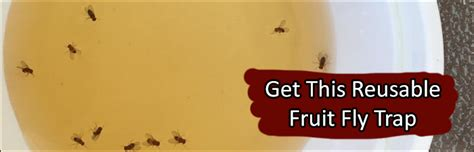 ways  instantly  rid  gnats fruit flies  home