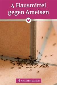 Hausmittel Gegen Mücken In Der Wohnung : hausmittel gegen ameisen die schnell helfen hausmittel ~ A.2002-acura-tl-radio.info Haus und Dekorationen