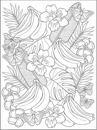Coloring Dover Publications Haven Tropical Creative Flower