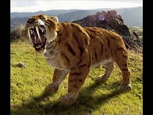 Saber Tooth Tiger Vs Dire Wolf
