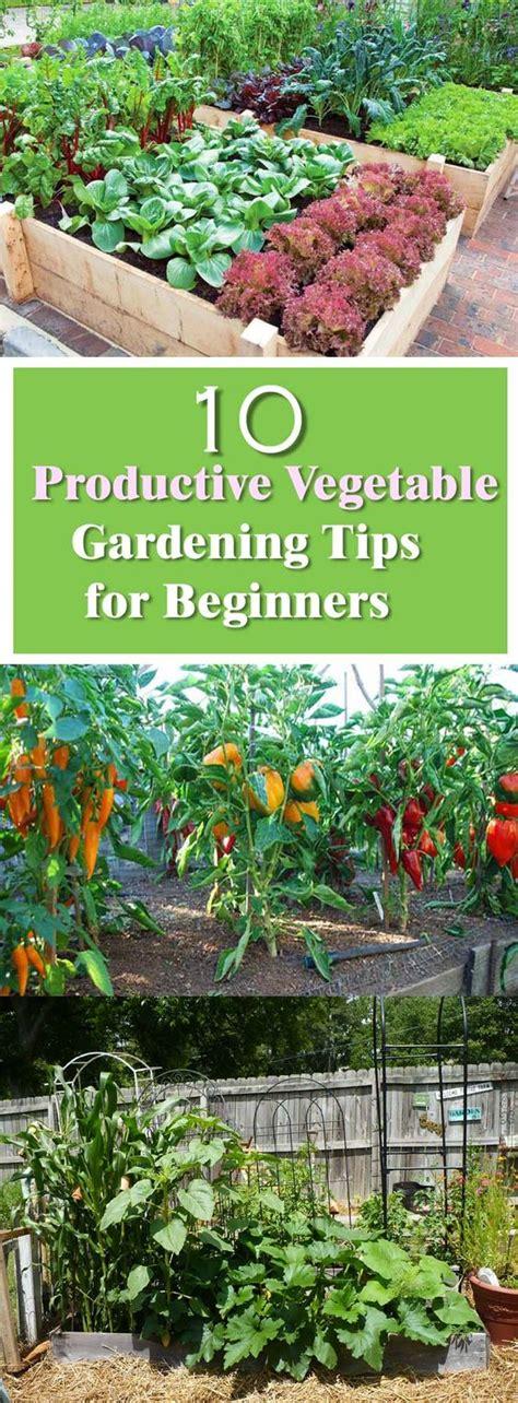 Gardening For Beginners by Beginner S Guide For Productive Vegetable Garden Gardens