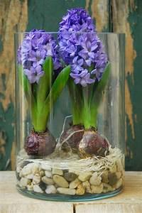 Blumenzwiebeln Im Glas : die besten 25 glasvase ideen auf pinterest blumen vase frische blumen und blaue glas vase ~ Markanthonyermac.com Haus und Dekorationen