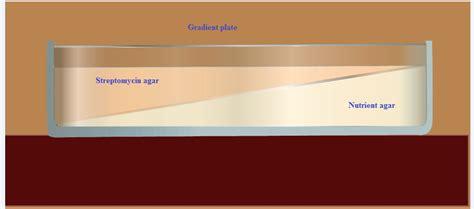 gradient tableware how to perform spontaneous antibiotic resistance marking
