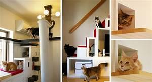 Another, Amazing, Cat