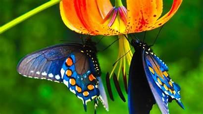 Butterfly Desktop Wallpapers Butterflies Wallpapersafari