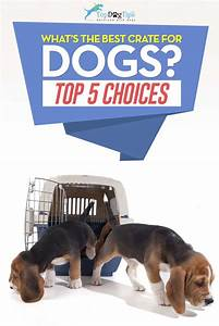 best cheap crates for dogs small and large dogs With best dog crates for small dogs