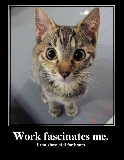 Works For Me Meme - work fascinates me cat meme funny animals pinterest cat animal and fur babies