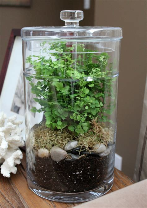 plant terrarium diy diy terrarium satori design for living