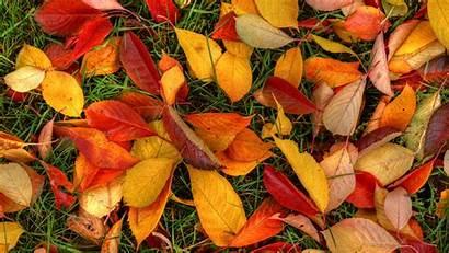 Leaves Autumn Wallpapers Fall Desktop 1080 1920