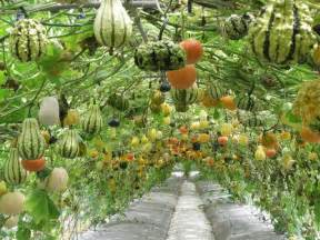 small wedding venues nyc 5 stunning vertical vegetable gardening ideas