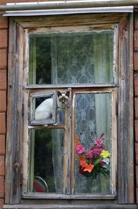 window cat door 1000 images about cat stuff on litter box