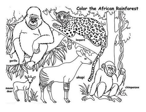 Rainforest Animals Coloring Pages by Rainforest Rainforest Animals Coloring Page