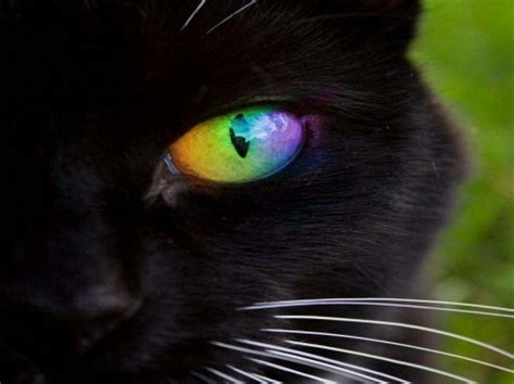 Rainbow Animal Wallpaper - rainbow eye cats animals background wallpapers on