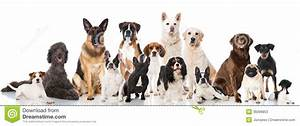 Gruppo Di Cani Fotografie Stock Immagine: 36099853
