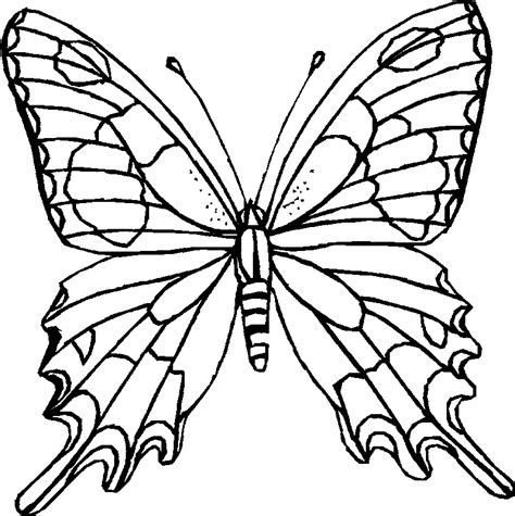 butterfly coloring printables  kids