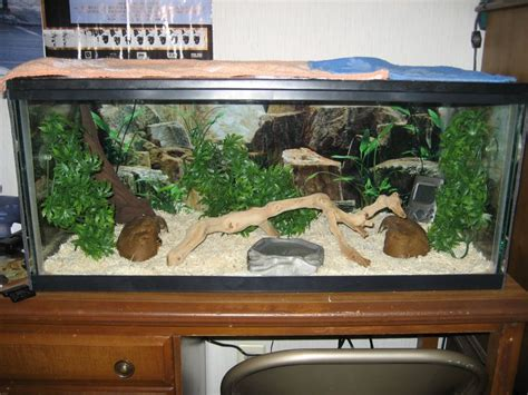 Marvellous Snake Aquarium Setup Snake Aquarium Kits, Snake Tank Setup Ideas Best Carpet Cleaner For Coffee Stains Brandon Florida Red Party Favors Hollywood Birthday To Remove Pet Urine Odor Elegant Hair Updos Calculating How Much Is Needed Stairs Cool Minecraft Carpets