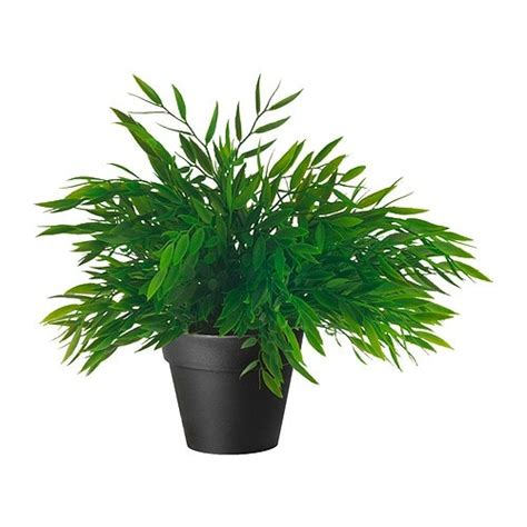in door plants pot three four plants argements fejka plante artificielle en pot ikea