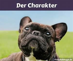 Hundebekleidung Französische Bulldogge : franz sische bulldogge wesen franz bulldogge ~ Frokenaadalensverden.com Haus und Dekorationen
