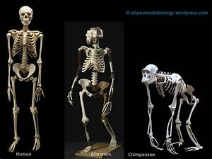 skeleton | All you need is Biology