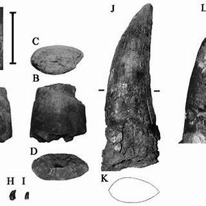 A-I, theropod teeth from the Kirkwood Formation of South ...