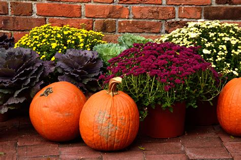 From pumpkins to mums - how to pick fall favorites and ...