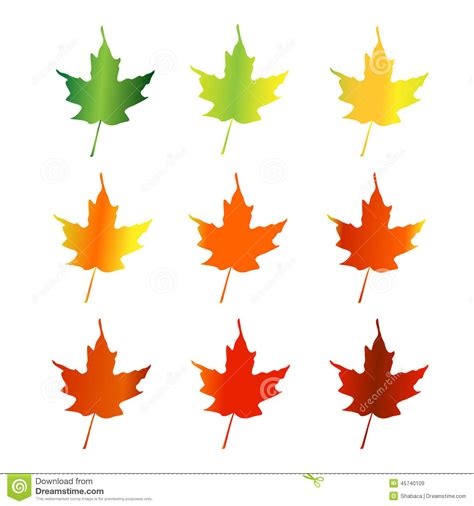 chagne colored tree maple leaves changing color stock vector illustration of