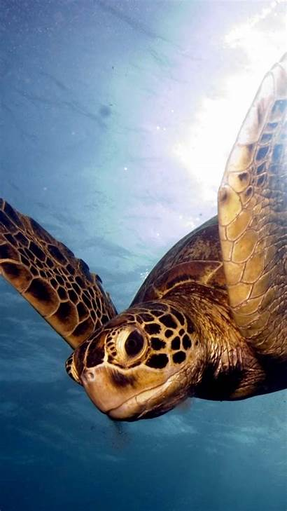 Turtle Sea Wallpapers Background Backgrounds Iphone Reef