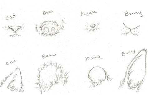draw animal faces  distinct ears  noses