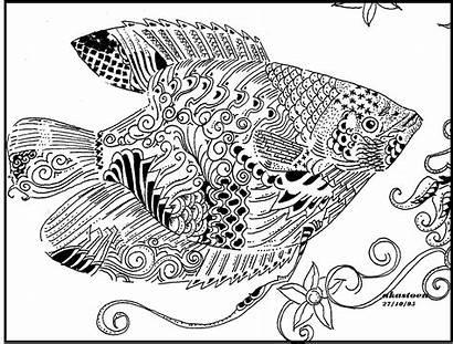 Stilasi Gambar Ikan Gurame Unik Menarik Dan
