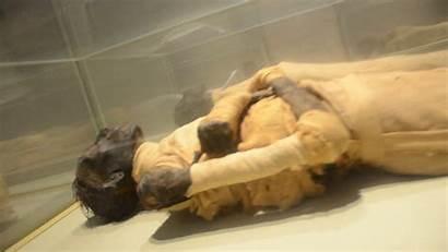 Momias Museo Cairo El Sala