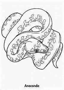 Free coloring pages of rainforest animals