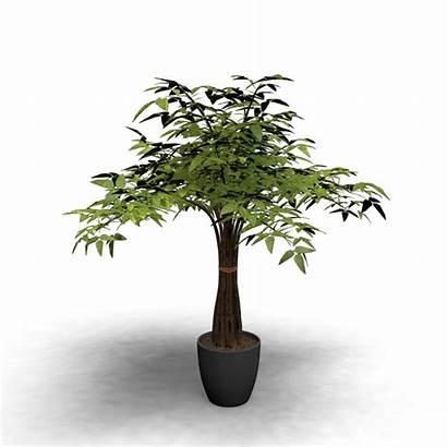 Indoor Plant Plants 3d