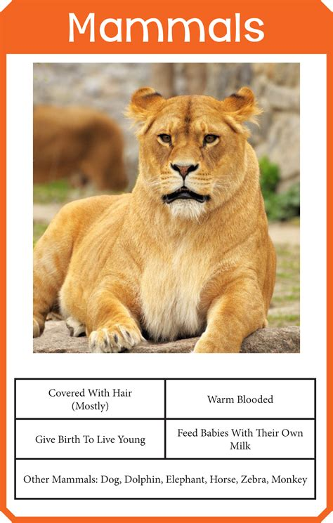 Animal Classification Cards One Beautiful Home