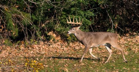 Chronic Wasting Disease In Mississippi Deer