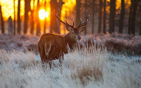 Wildlife Backgrounds For Desktop 62 Images