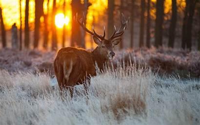 Wildlife Desktop Backgrounds Wallpapertag Related