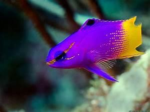 BEAUTIFUL FISH - Google Search | Underwater Marvels ...