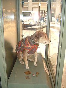 owney dog wikipedia