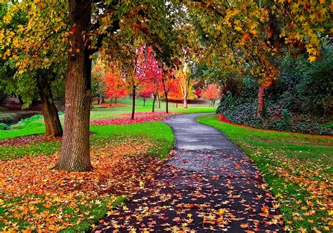 beautiful fall colors autumn colors alley autumn autumn colors beautiful beauty colorful colors fall forest