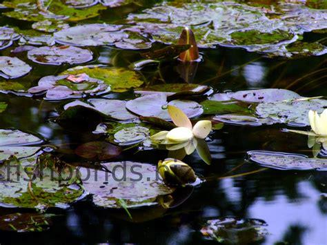 types  fish pond plants    common species